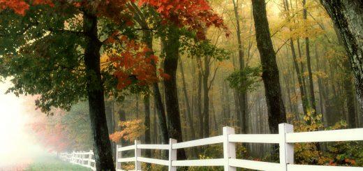 Lo Steccato - Anonimo