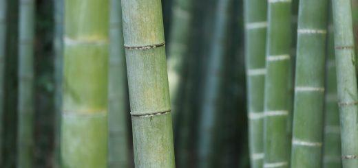 L'Umiltà che Eleva - Lao Tzu